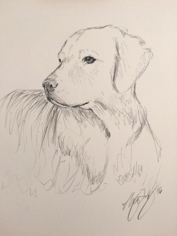 Golden Sketch