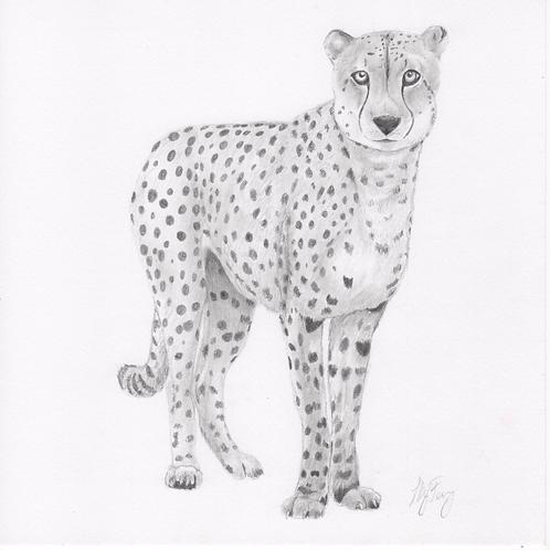 """""""Cheetah"""" Print (10"""" x 10"""")"""