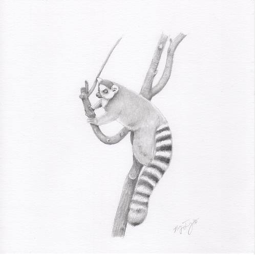 """""""Lemur"""" Print (10"""" x 10"""")"""
