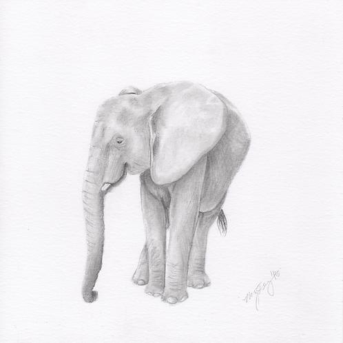 """""""Elephant"""" Print (10"""" x 10"""")"""