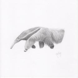 """Anteater"""