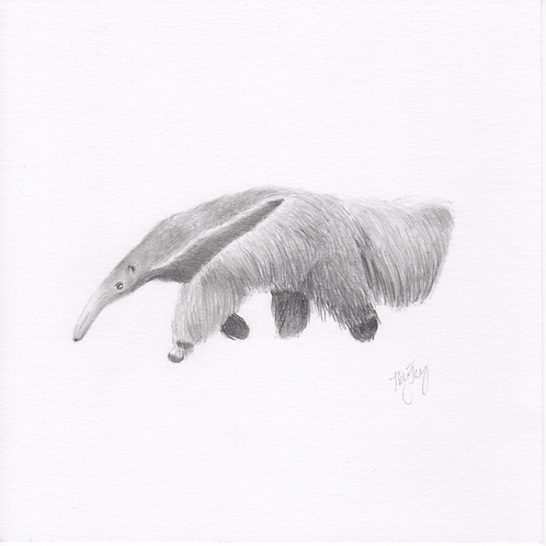 """Anteater"" Print (10"" x 10"")"