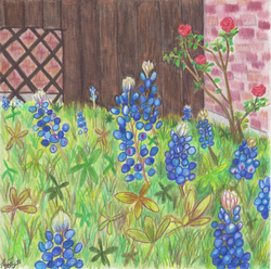 Roses and Bluebonnets