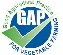 GAP VEGE-1.jpg