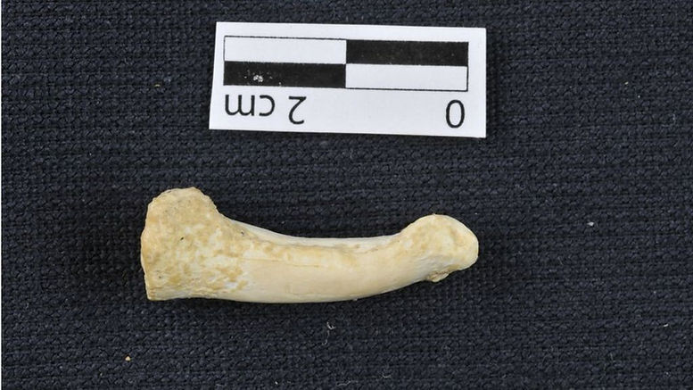 Luzon Finger Bone.jpg