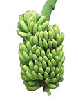 Jan 9 - bananas.jpg