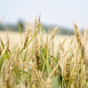 Fiscale regels vof geen probleem in agrarische sector