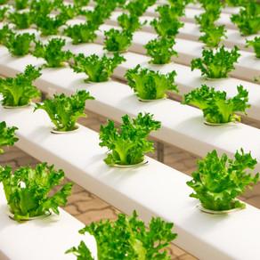 Nieuw keurmerk huisvesting agrarische arbeidsmigranten