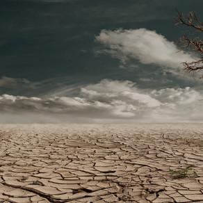 Kabinet steunt boeren tegen gevolgen droogte