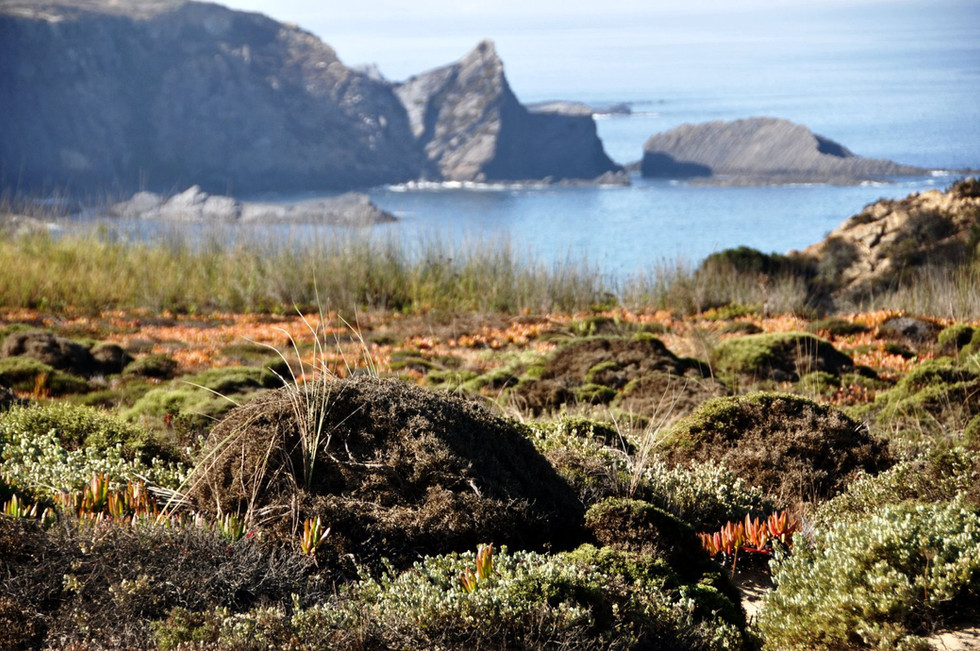 'WALK WILD, WALK FREE – HIKING THE FISHERMAN'S TRAIL IN PORTUGAL' - by Say Yes to New Advent