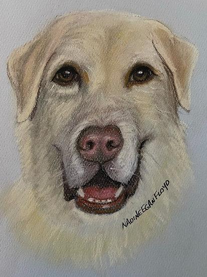 Pet Head Pastel Portrait 11 x 14