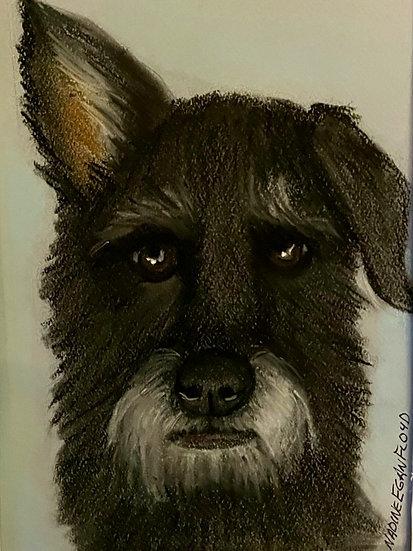 Pet Head Pastel Portrait 5 x 7