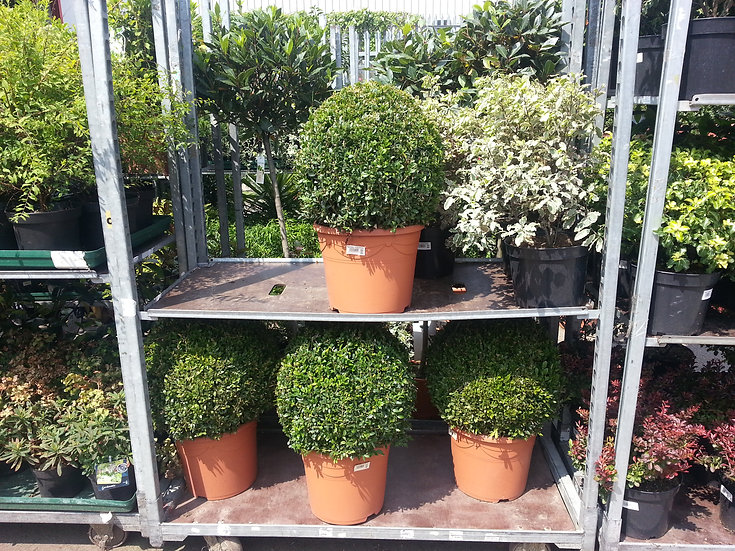OUT DOOR PLANTS, CLICK TO SEE DETAILS.