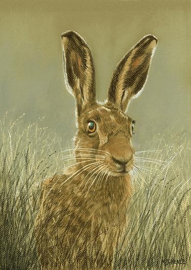 Belle Hare.