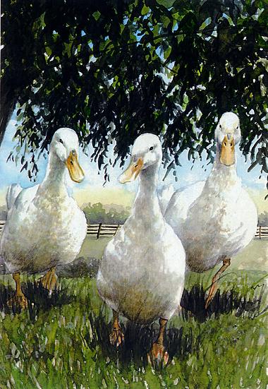 Three little Aylesbury Ducks are we.