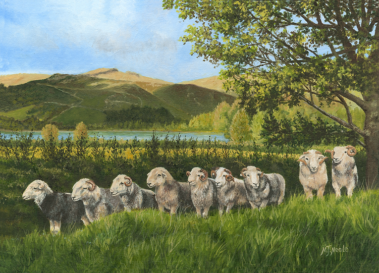 """""""What are they all looking at?""""    herdwicks, Cumbria."""