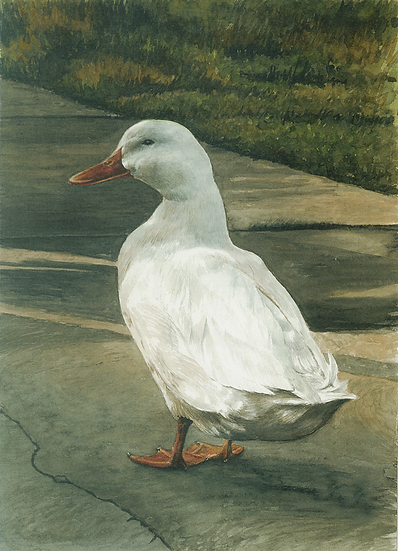 Donald m'duck.