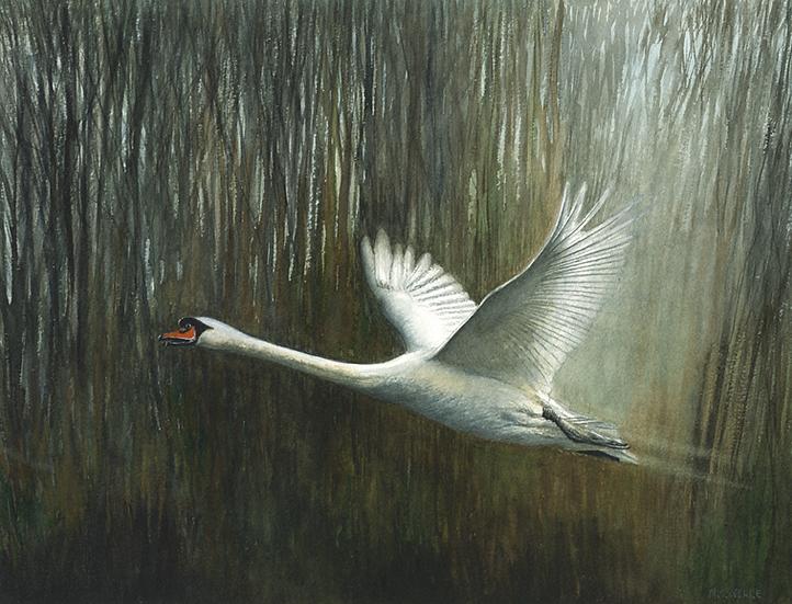 Swan light.