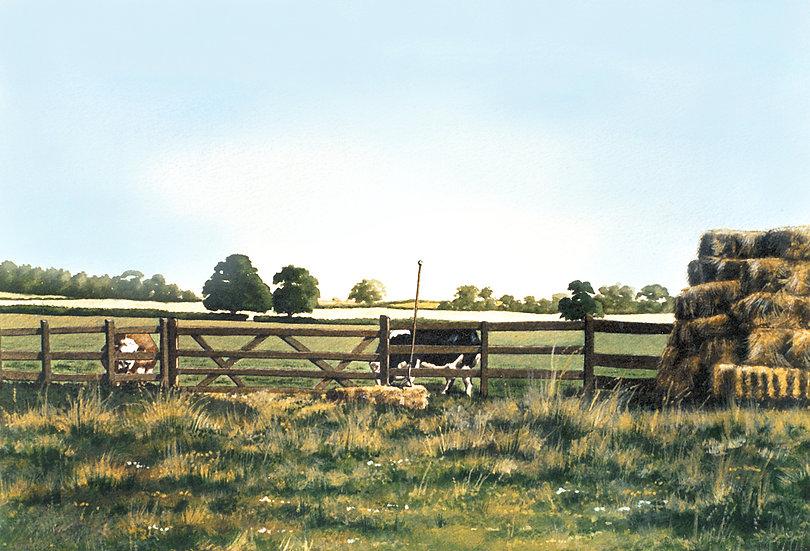 Cows and Haystack.