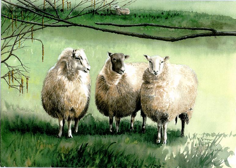 We three sheep.