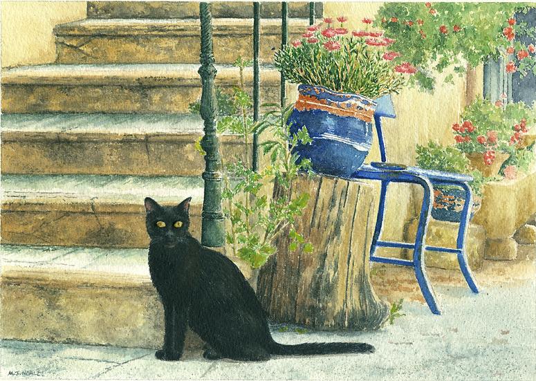 Black cat-blue pots.