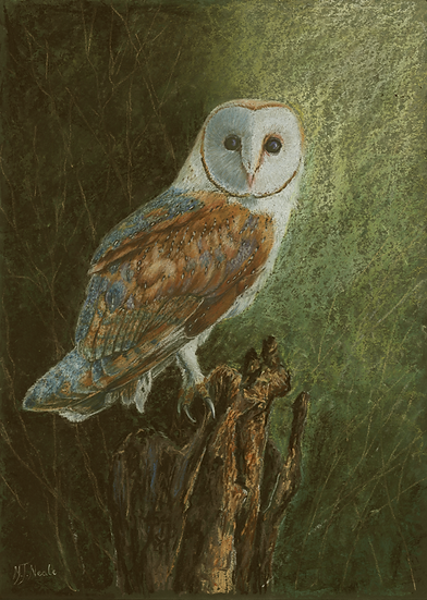 Who is looking at who!-Barn Owl.
