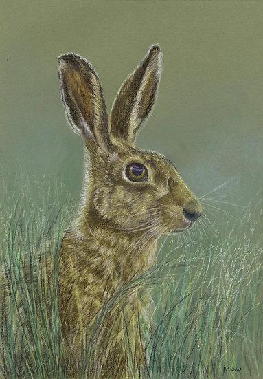 I Hare - I See!
