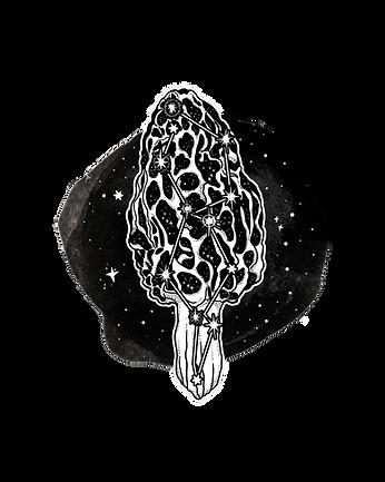 Morel Mushroom_Constellation_NEW.png