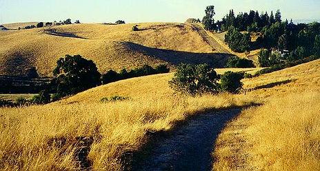 Arastradero Preserve golden fields.jpe