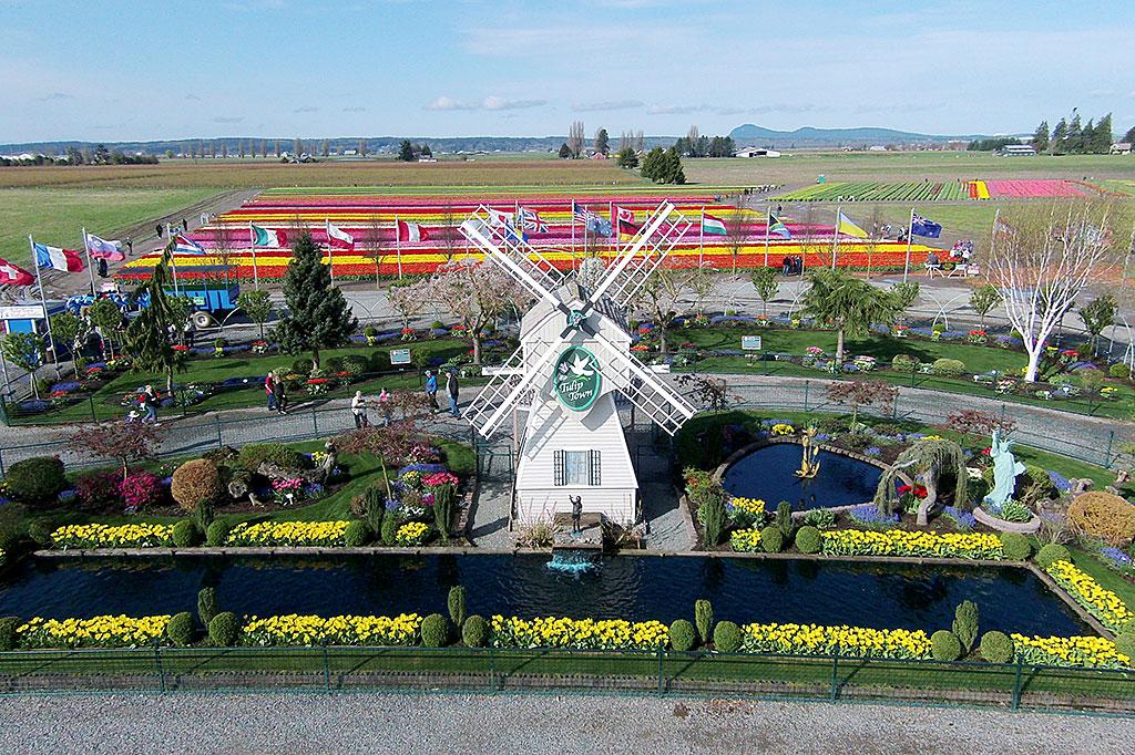 WindmillAerial.jpg