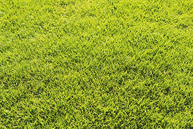 lawn1.png