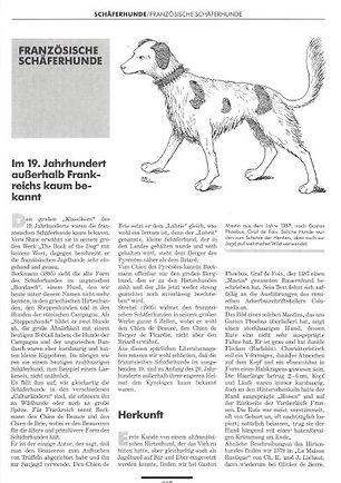 Franzosische Schaferhund.JPG
