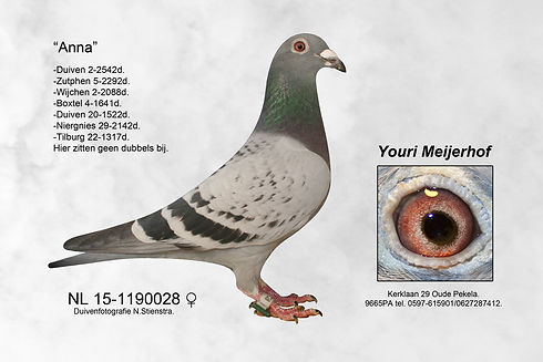 NL 15-1190028 (1).jpg