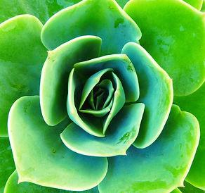 succulent-1263606_1280.jpg