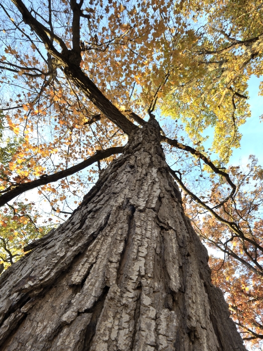 THE TREE IN FALL #1