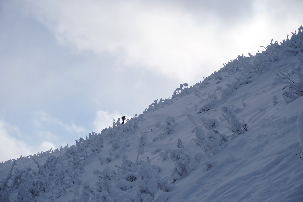 Skiing mont lyall backcountry touring