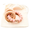 Thumbnail: Anneau de dentition (shell)