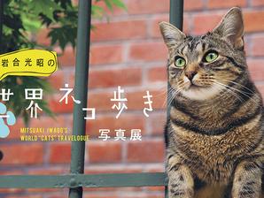 「岩合光昭の世界ネコ歩き」展覧会の紹介動画を制作しました