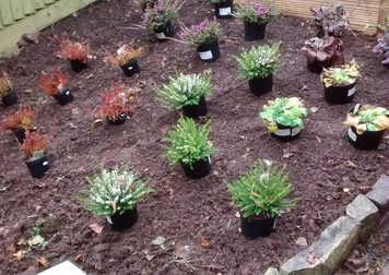 planting plan, slope garden, glastonbury gardener