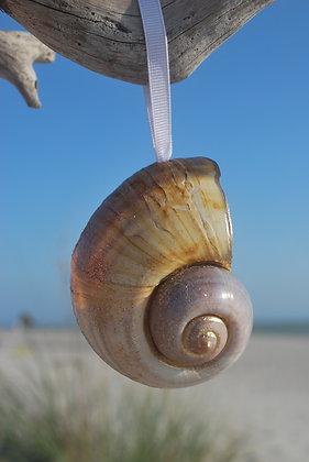 Shell Ornaments - Set of 2