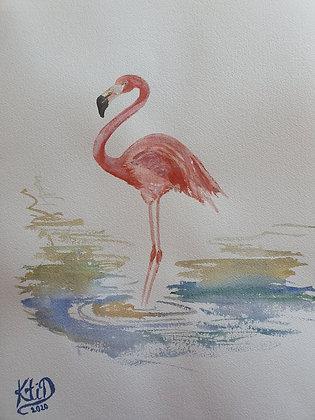 Flamant rose, les pieds dans l'eau