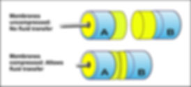 Membrane to Membrane NEW (Large).jpg