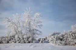 Winters canvas
