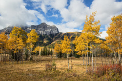Autumn colours in the Rockies