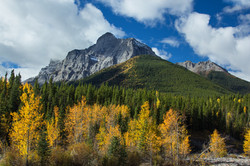 Fall colours in the Rockies