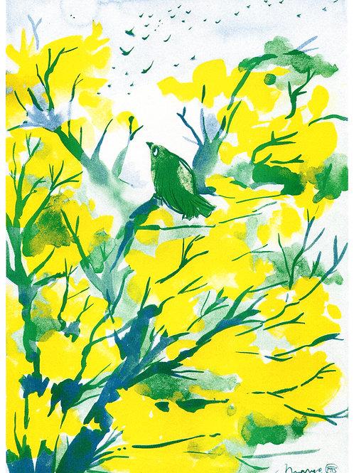 Song Bird - Riso print A4