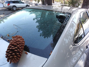 Magic Glass windshield replacement in Prescott