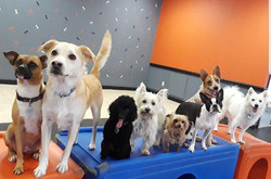Bark Republic Doggy Daycare