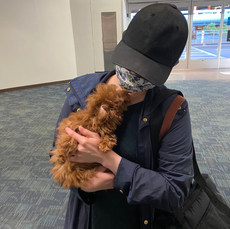 Coco Teacup poodle