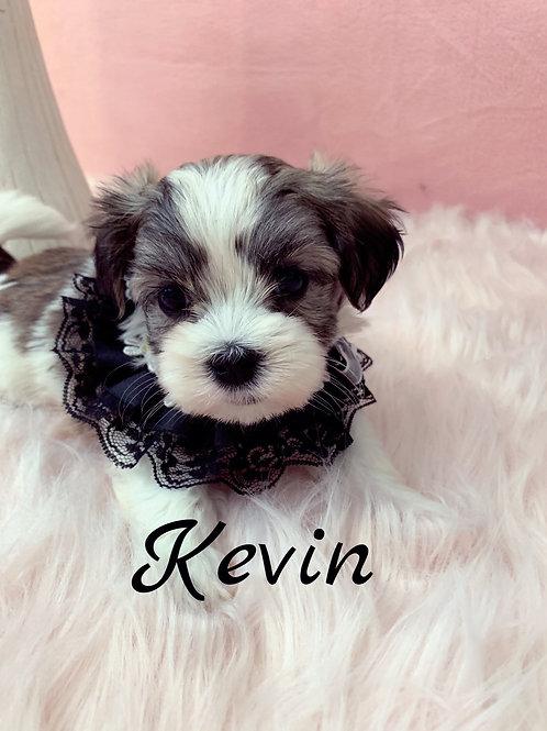 Kevin-Mal-Shi (1070)